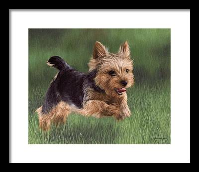 Yorkshire Terrier Framed Prints