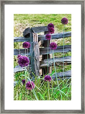 Yorktown Onions Framed Print