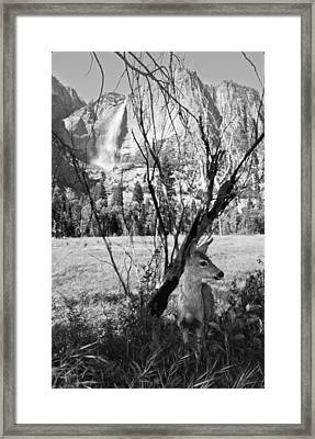 Yosemite Falls And Fawn Framed Print