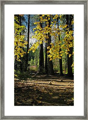 Framed Print featuring the photograph Yosemite Fen Way by John Haldane