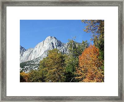 Yosemite Trees Framed Print by Richard Reeve