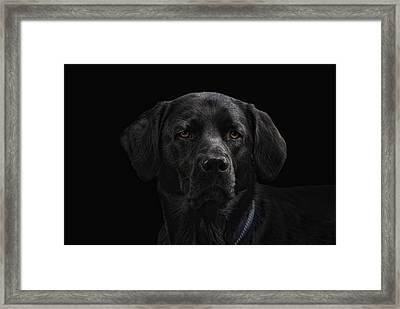 Yoshi Framed Print by Joachim G Pinkawa