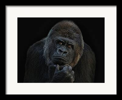 Ape Framed Prints