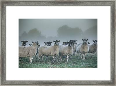 You And Ewes Army? Framed Print by Chris Fletcher
