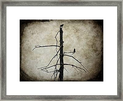 You Are In My Eyes Framed Print by Zinvolle Art
