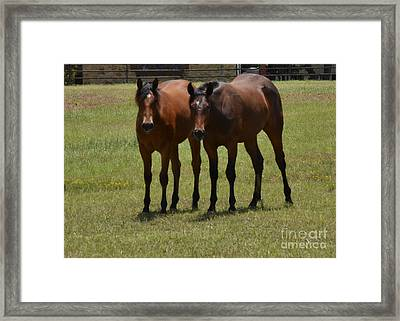 You Are In The Spotlight Framed Print by Ruth  Housley