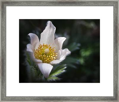 You Are My Butercup Framed Print