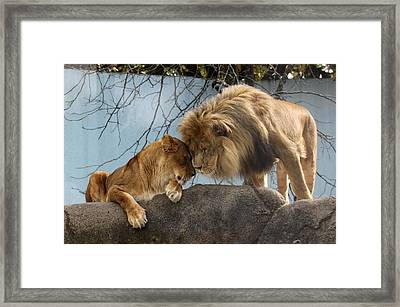 You Are My Love Framed Print