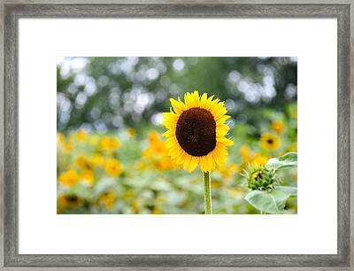 Framed Print featuring the photograph You Are My Sonshine by Linda Mishler