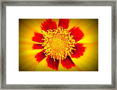 You Are My Sunshine Framed Print by Angela Bruno