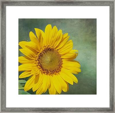 You Are My Sunshine Framed Print by Kim Hojnacki