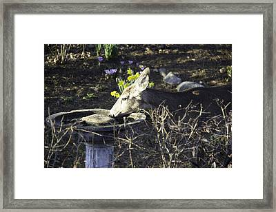 You Are Not A Bird Framed Print by Teresa Mucha