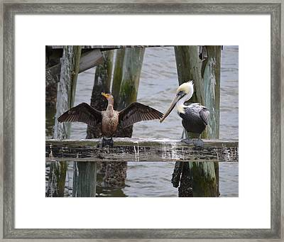 You Are Not An Eagle Framed Print