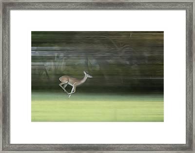 You Better Run Through The Jungle Framed Print by Hazel Billingsley