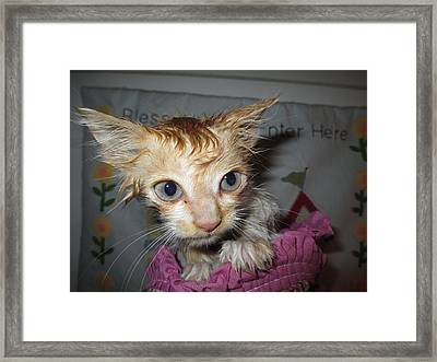 You Call This A Rescue? Framed Print by Diannah Lynch
