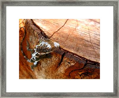 Framed Print featuring the photograph You Can See Me? by Greg Allore