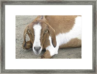 You Can't Be Serious. Framed Print by Russell Smidt