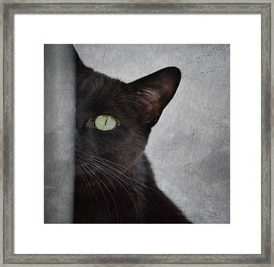 You Can't See Me Framed Print by Diane Alexander