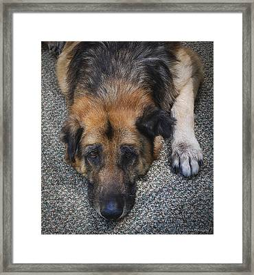 Framed Print featuring the photograph You Chase I'm Retired by Phil Abrams