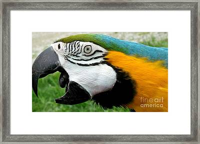 You Did What ................ Framed Print by Gail Matthews