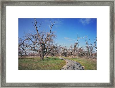 You Gave Me A Reason Framed Print by Laurie Search