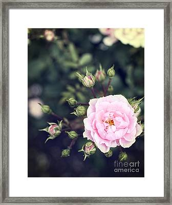 You Had Me At Hello - Pink Rose Photo Framed Print by Ivy Ho