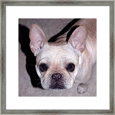 You Had Me At Hello Framed Print