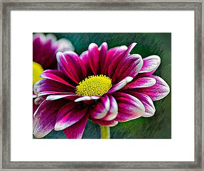 You Had Me At Hello........... Framed Print