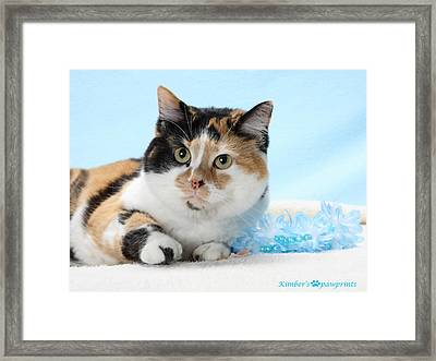 You Had Me At Meow..... Framed Print