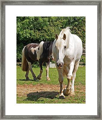 You Lead I'll Follow - Horse Friends Framed Print by Gill Billington