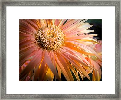You Light Up My Life Framed Print by Karen Wiles