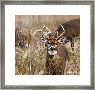 You Lookin At Me? Framed Print by Butch Lombardi