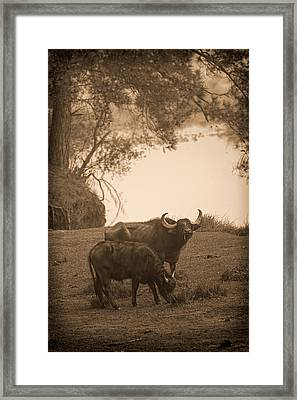 You Lookin At Me Framed Print by Frank Feliciano