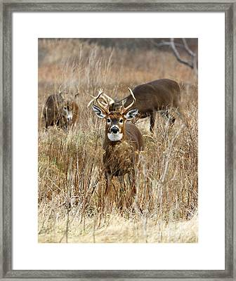 You Lookin At Me II Framed Print by Butch Lombardi
