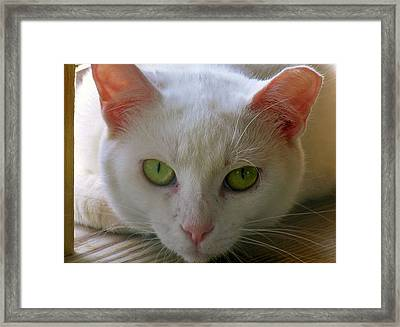 Framed Print featuring the photograph You Lookin At Me by Sherman Perry
