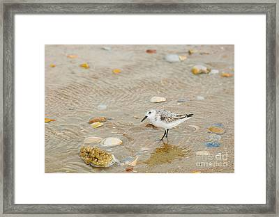 You Lookin At Me? Framed Print by Suzi Nelson