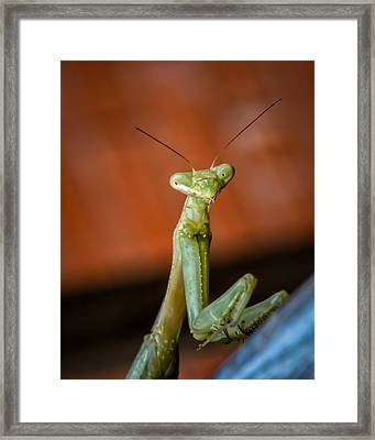 You Looking At Me? Framed Print by James Barber