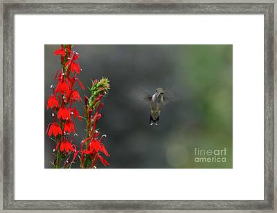 You Looking At Me Framed Print by Judy Wolinsky