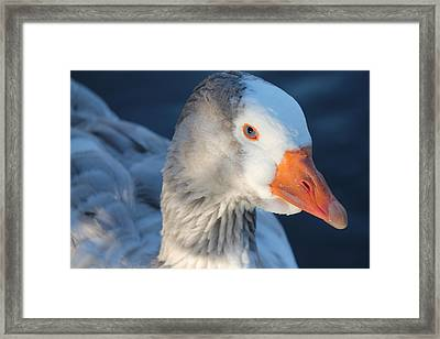 You Looking At Me Framed Print by Lorri Crossno