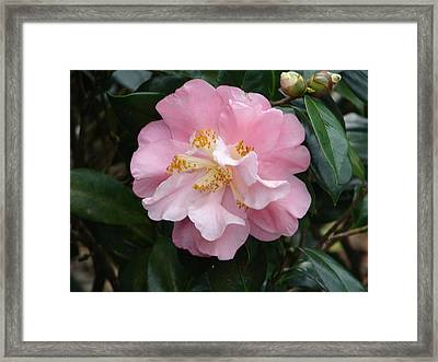 Framed Print featuring the photograph You Make Me Blush by Lew Davis