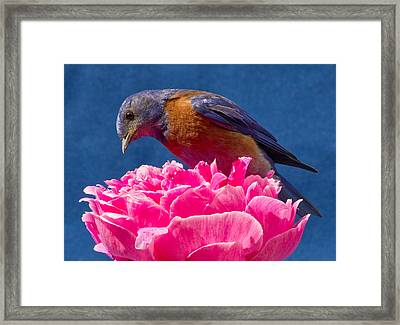 You Move And I Have My Lunch Framed Print by Jean Noren