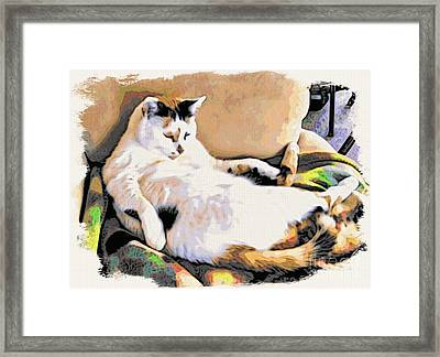 You Move The Stuff From The Corrner. I Need My Nap. Framed Print by Phyllis Kaltenbach