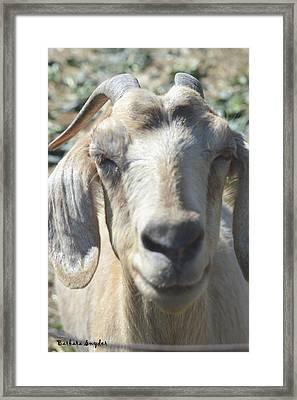 You Old Goat Framed Print by Barbara Snyder