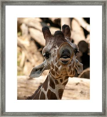 Framed Print featuring the photograph You So Funny by Julie Clements