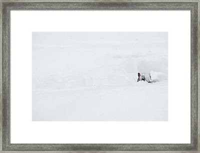You Sure There's A Nut Down There? Framed Print