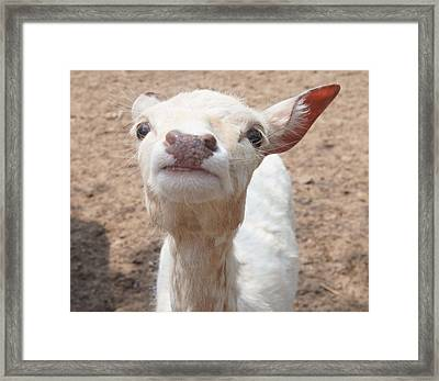 You Talkin To Me? Framed Print by Kristine Bogdanovich
