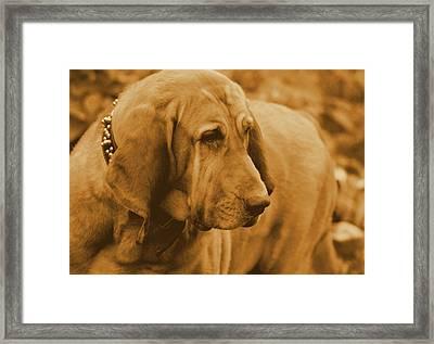 You Ve Got My Full Atttention   Framed Print by Rosemarie E Seppala