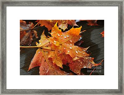 You Waited For Me To Fall Framed Print by Catherine Reusch Daley