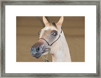 Young And Aware Framed Print