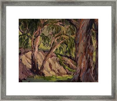 Young And Old Eucalyptus Framed Print